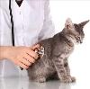 Ветеринарные клиники в Степном